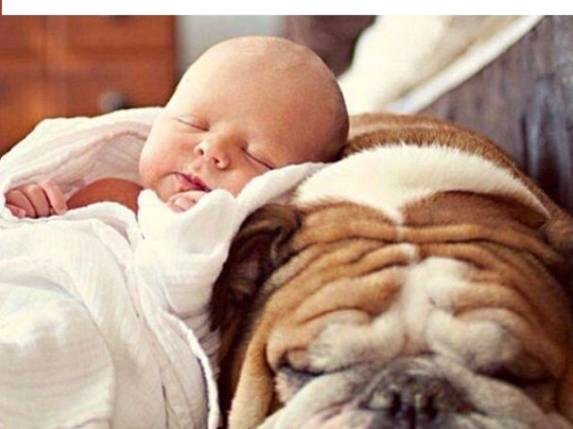 baby and dog sleep in comfort