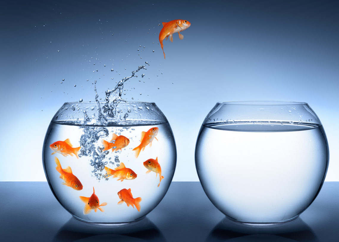 fish jumping from bowl out of comfort zone